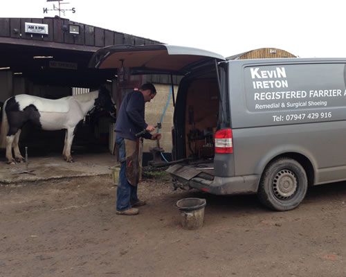 Kevin shoeing Mrs Moo!