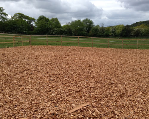 One of our chip paddocks